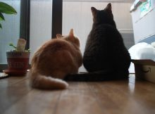 監視を愛し監視に愛された猫ら