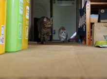 師走る猫走る、蹴りそうになるので程々に