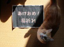 猫の体温で現るあけおめ!文字。菊之助と力丸より新年のご挨拶