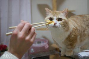 人間食に興味を示す菊之助