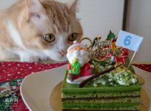 この誕生ケーキは何か違う!違いがわかる男菊之助
