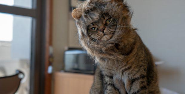 ライオンたてがみが同化した力丸