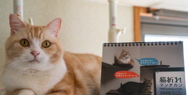 猫折れ2020卓上カレンダー、今年もおつくりいたしました