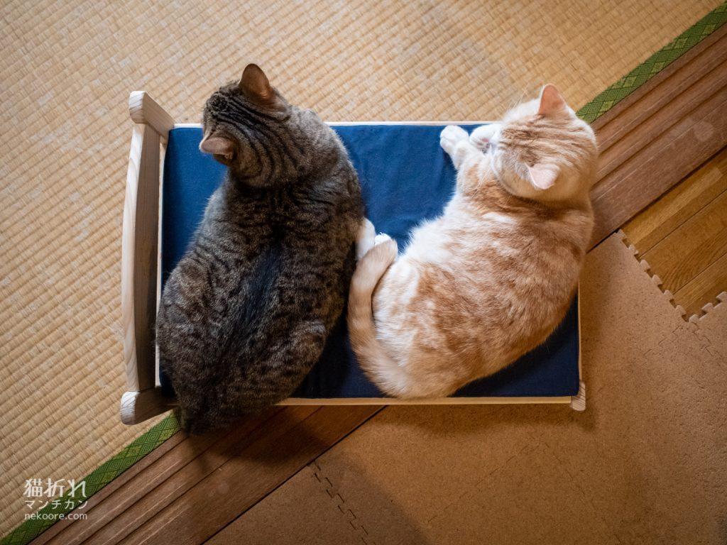 菊之助、力丸ご推薦、猫様ベッド試作機に満員御礼