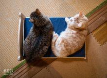 菊之助、力丸ご推薦、猫様ベッド試作機